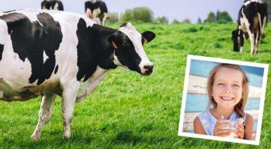 dairy-2.jpg