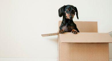 moving-box-2.jpg