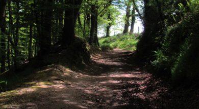 Unsplash-forest-track.jpg