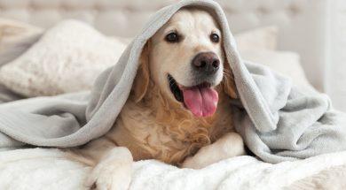pet-adoption-isolation-antidote-3.jpg