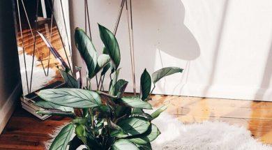 best-indoor-plants-neri-morris.jpg