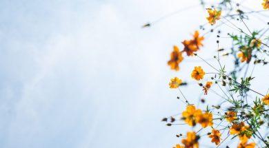 yellow-flowers-masaaki-komori-unsplash.jpg