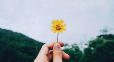 yellow-flower-kawin-harasai-unsplash.jpg
